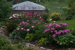 Календарь цветения пионов 2012г 0_6ffdf_663271a1_S