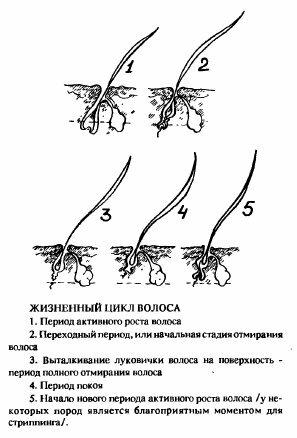 Есть мнение. Структура волос кошки 0_c97c1_847be460_L