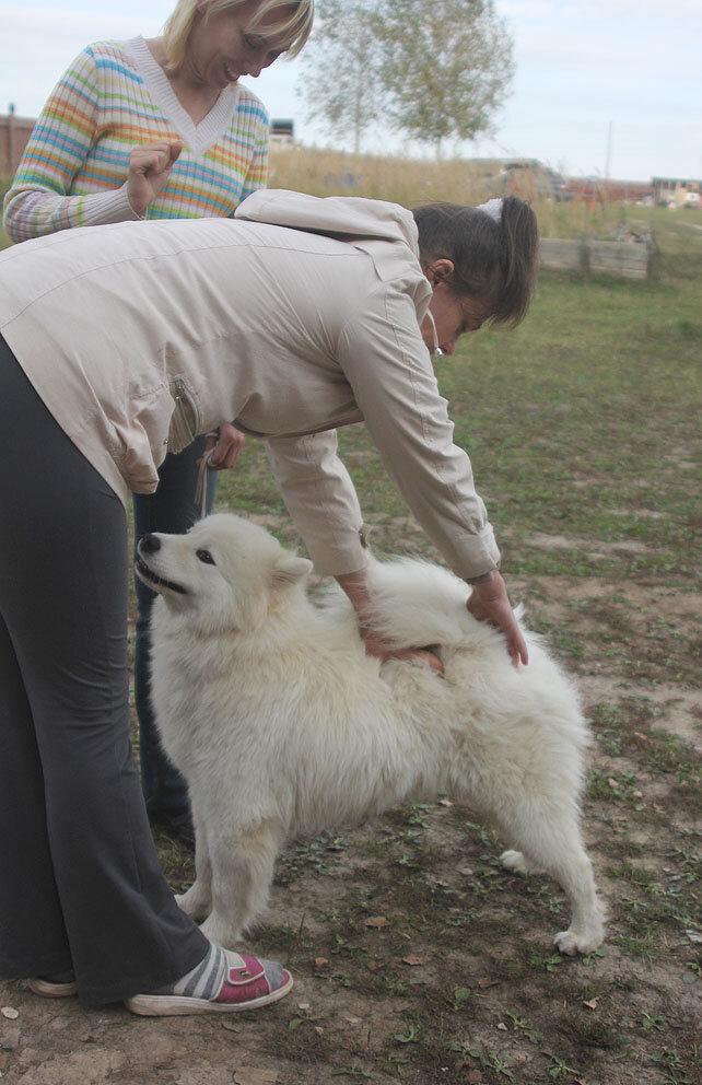 Недельные курсы повышения квалификации для собакообожак :-) Приглашаем всех!!! - Страница 2 0_7d72c_14b971b9_XXL
