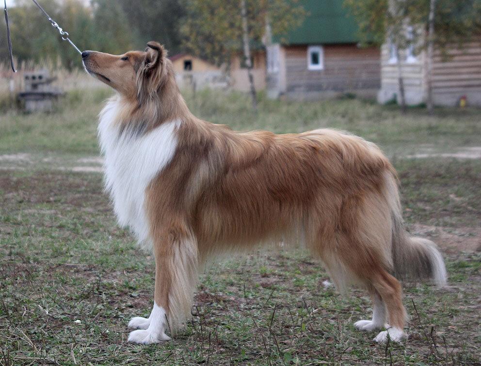 Недельные курсы повышения квалификации для собакообожак :-) Приглашаем всех!!! - Страница 2 0_7d745_a12e788d_XXL