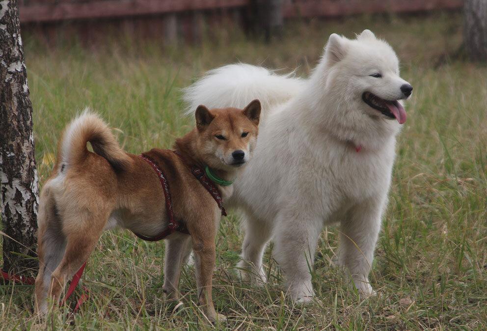 Недельные курсы повышения квалификации для собакообожак :-) Приглашаем всех!!! - Страница 3 0_7d781_736b0400_XXL