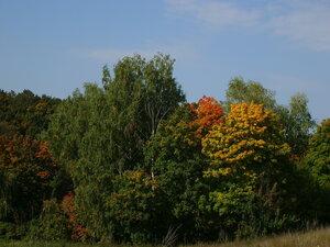 Осенний фотоконкурс 0_8870c_29990a0_M