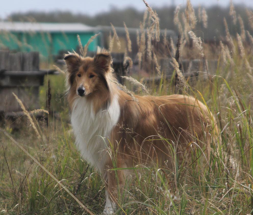 Недельные курсы повышения квалификации для собакообожак :-) Приглашаем всех!!! - Страница 2 0_7d77a_283e0eec_XXL