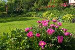 Календарь цветения пионов 2012г 0_6ffdc_70a6b35_S
