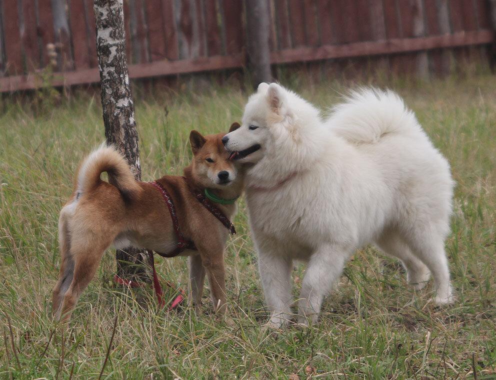 Недельные курсы повышения квалификации для собакообожак :-) Приглашаем всех!!! - Страница 3 0_7d782_ab4cfdc0_XXL