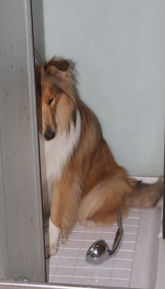 Недельные курсы повышения квалификации для собакообожак :-) Приглашаем всех!!! - Страница 2 0_7d755_a9b80496_XXL