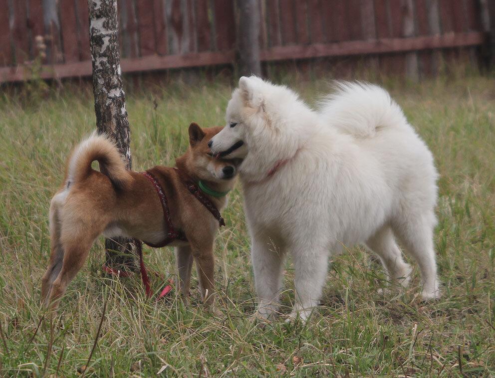 Недельные курсы повышения квалификации для собакообожак :-) Приглашаем всех!!! - Страница 3 0_7d783_8fa5fd9d_XXL