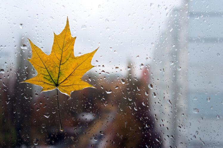 ... Y caen las hojas, llega ....¡¡¡ EL Otoño !!! - Página 9 0_ef601_f8fd13f1_XL