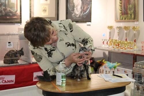 """Международная выставка кошек AFC """"Удивительные лесные кошки"""", 1 марта 2014 г. Сургут - Страница 2 0_e47f0_c1102446_L"""