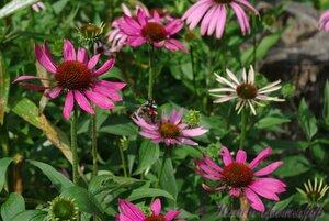 Мы любим цветы - Страница 3 0_a2246_89f5b9b7_M