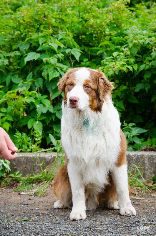Мои собаки: Зена и Шива и их друзья весты - Страница 5 0_a03a2_18e54cb0_XL