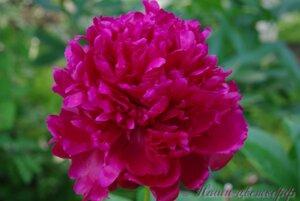Мы любим цветы - Страница 3 0_9db99_9ef9b2d0_M