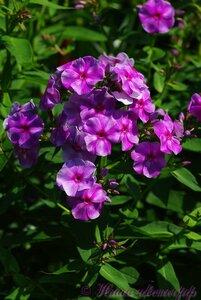 Мы любим цветы - Страница 3 0_a034a_81c9243b_M