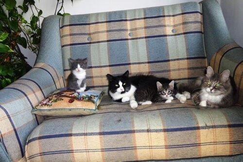 Кому коты? 0_154c6a_826f5ca5_L
