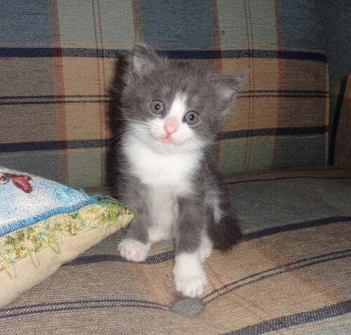 Кому коты? 0_1545d1_89aa6ccb_L