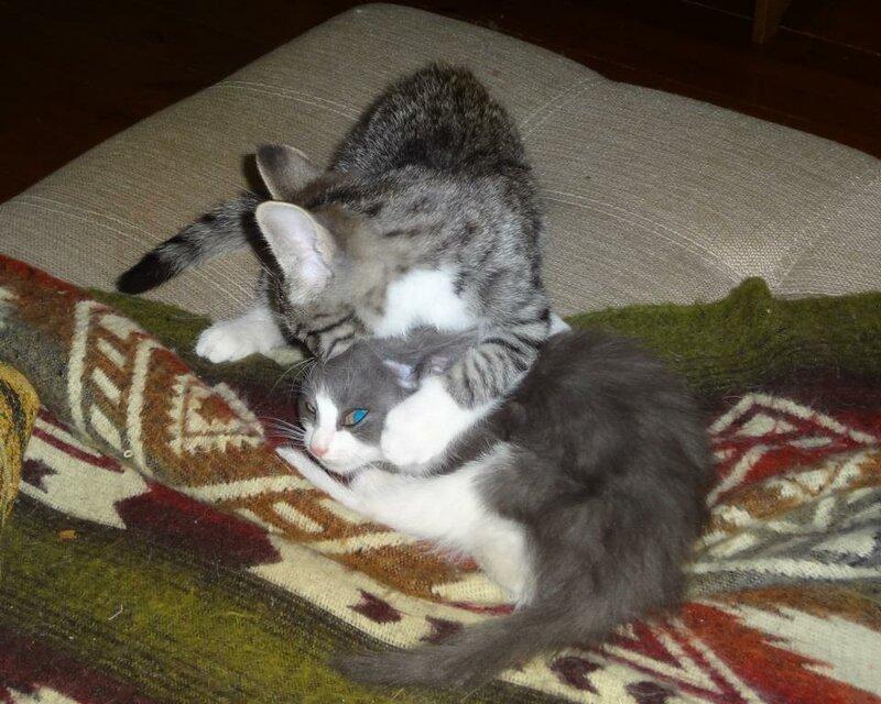Кому коты? 0_159243_df576140_XL
