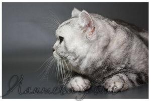 Каталог вяжущих котов 0_124c1c_8fce26c5_M