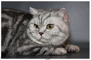 Каталог вяжущих котов 0_124c1d_d98369e8_M