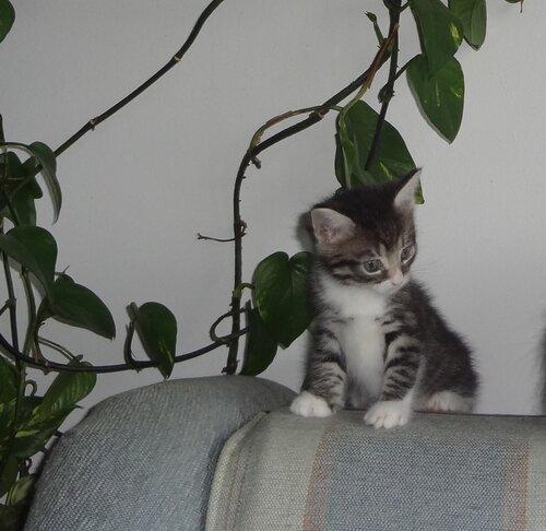 Кому коты? 0_154599_e0a3ab2_L