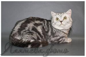 Каталог вяжущих котов 0_124c18_eb25dc26_M