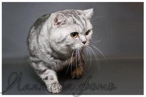 Каталог вяжущих котов 0_124c1b_7d47ed6b_M