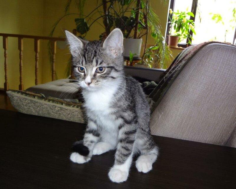 Кому коты? 0_15923f_6ffc8ee0_XL