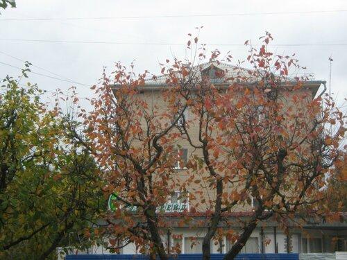 Осень, осень ... как ты хороша...( наше фотонастроение) - Страница 4 0_f6e59_22dea027_L