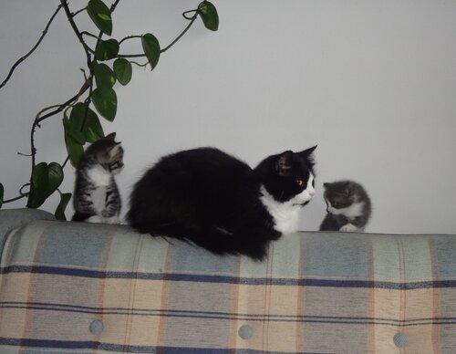Кому коты? 0_154591_11b31ded_L