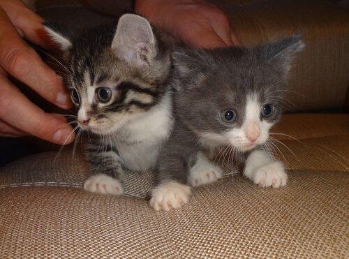 Кому коты? 0_1545d4_2c954eb7_L