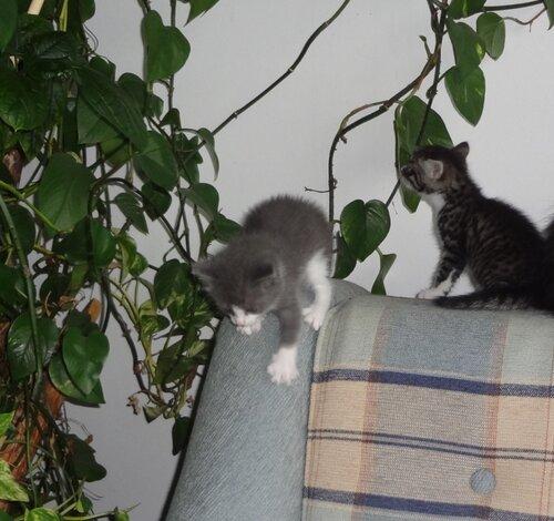 Кому коты? 0_154593_6969c59a_L