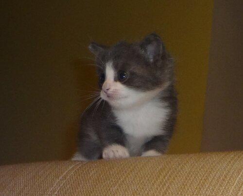 Кому коты? 0_1545d5_f1b7269f_L