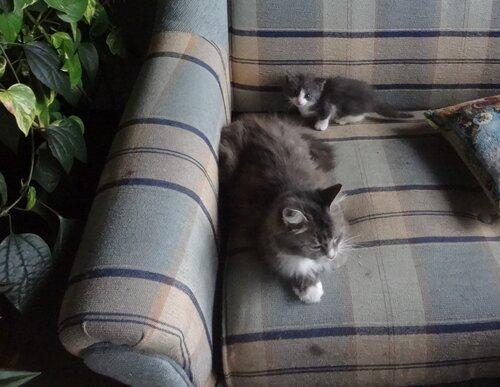 Кому коты? 0_154596_90cb3f89_L