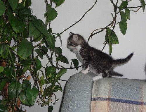 Кому коты? 0_154594_829d1011_L