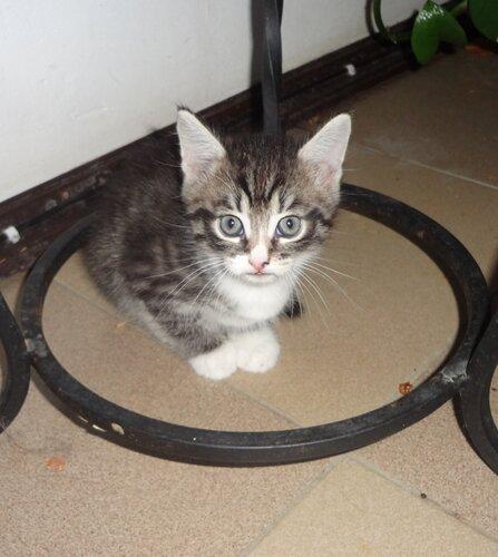 Кому коты? 0_1545d2_2df347f_L