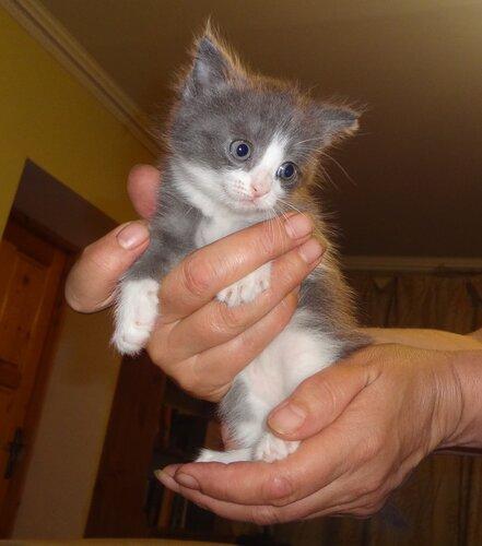 Кому коты? 0_1545d6_c16ebb99_L
