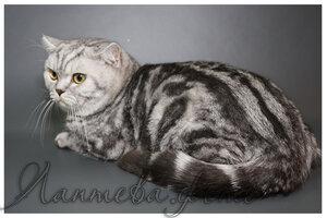 Каталог вяжущих котов 0_124c1e_804ea5fa_M