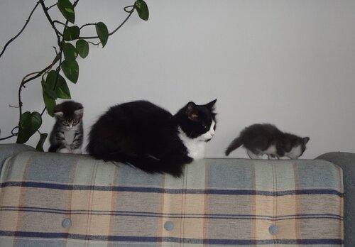 Кому коты? 0_154598_1b664724_L