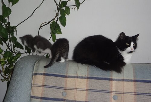 Кому коты? 0_154592_4943bd36_L
