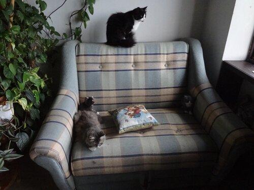 Кому коты? 0_154597_2d637cc9_L