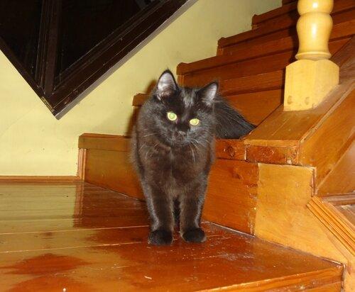 аусси и кошка - Страница 3 0_145787_fb6a9035_L