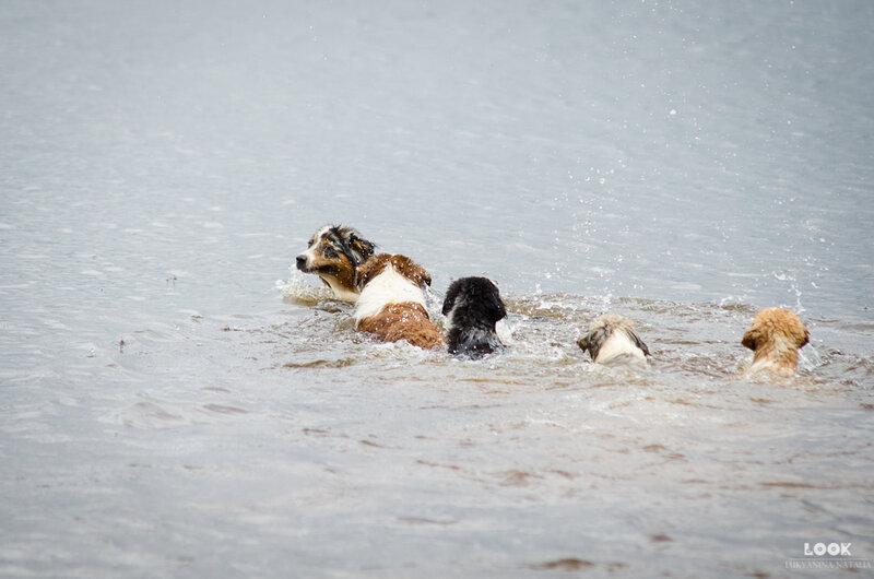 Мои собаки: Зена и Шива и их друзья весты - Страница 4 0_a03d4_31a99dd8_XL