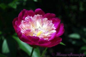 Мы любим цветы - Страница 3 0_9d1f5_5a036bb9_M