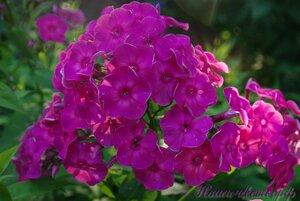 Мы любим цветы - Страница 3 0_a024d_f6bc8405_M