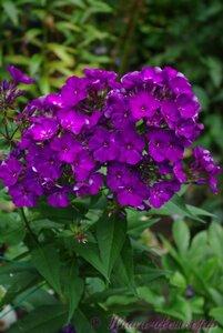 Мы любим цветы - Страница 3 0_a2250_23ec49df_M