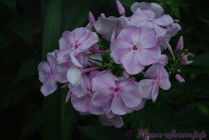 Мы любим цветы - Страница 3 0_a0251_84901dbb_M