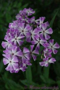 Мы любим цветы - Страница 3 0_a2258_868ab199_M