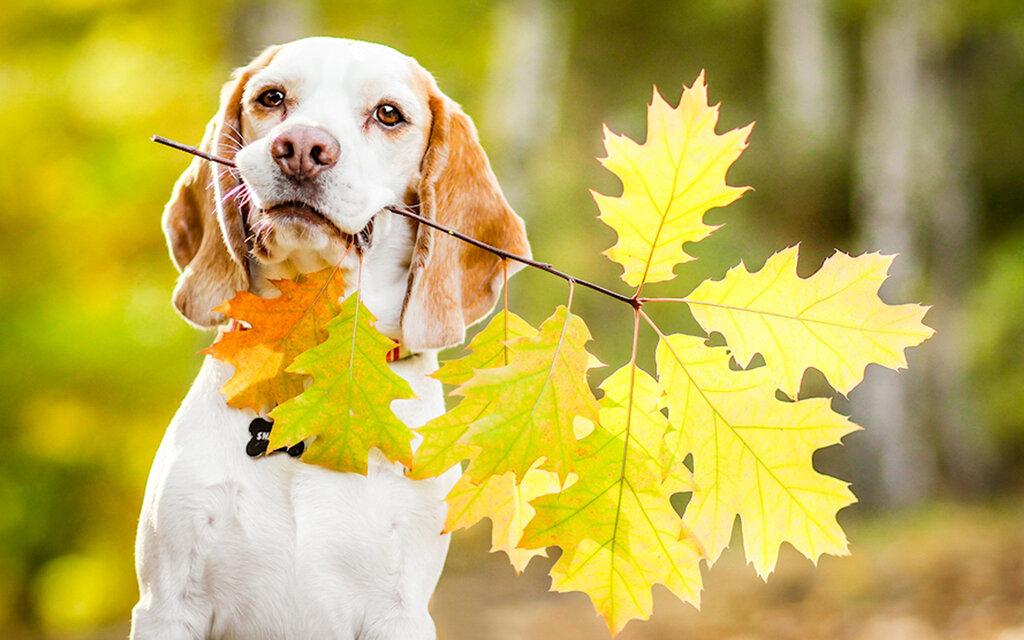 ... Y caen las hojas, llega ....¡¡¡ EL Otoño !!! - Página 6 0_101a38_f6eaac33_XXL