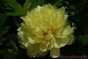 Мы любим цветы - Страница 3 0_9dfa2_e7bb0c04_M