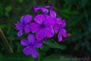 Мы любим цветы - Страница 3 0_a0253_51055ab1_M