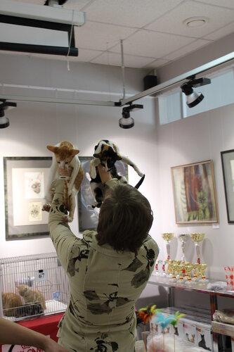 """Международная выставка кошек AFC """"Удивительные лесные кошки"""", 1 марта 2014 г. Сургут - Страница 2 0_e497a_abb925d8_L"""